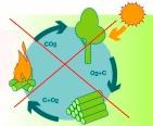 korte-koolstofkringloop