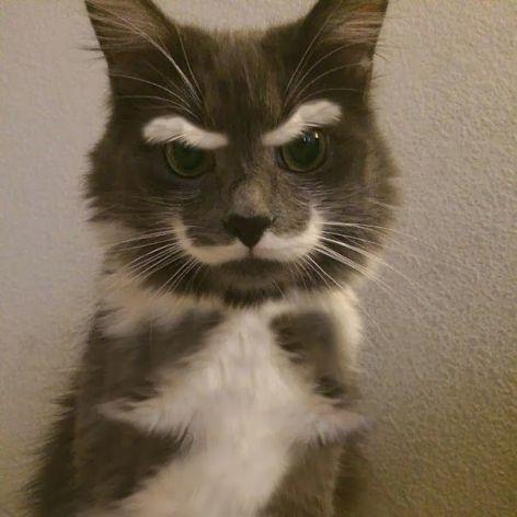unique_cat_fur_1